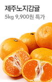 제주 노지감귤5kg + 무료배송_rightevent banner bottom_6_/deal/adeal/345486