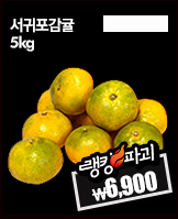 밤_today banner_6_/deal/adeal/363928