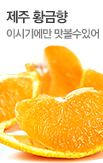 제주 황금향 5kg _rightevent banner bottom_5_/deal/adeal/374639