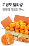 탐라왕 천혜향,레드향 5kg