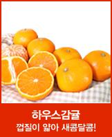 파격특가! 표선농협 하우스 감귤 2kg_today banner_4_/deal/adeal/564266