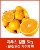 표선농협 하우스 감귤 소과 5kg 20000원_today banner_4_/deal/adeal/585766