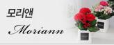 모리앤! 프리미엄 카네이션_premium banner_10_쇼핑여행공연_/deal/adeal/1069243