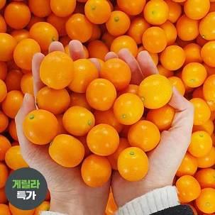 [게릴라특가] 제주 금귤(낑깡) 1.8kg