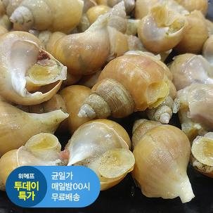 [투데이특가] 동해안 백고동1kg