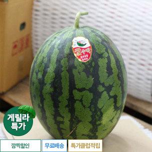 [게릴라특가] 수박 1통 8kg 내외