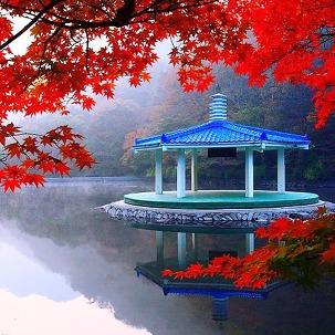 내장산 가을단풍&전주한옥마을 ~11월