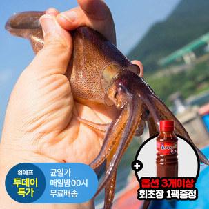 [투데이특가] 싱싱 총알오징어 1kg