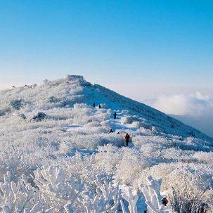 [서울出] 태백산 눈꽃축제 & 트레킹