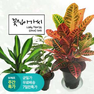 [주간특가] 중대형 공기정화식물20종