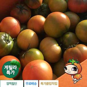 [게릴라특가] 대저 찰 토마토 3k/5kg