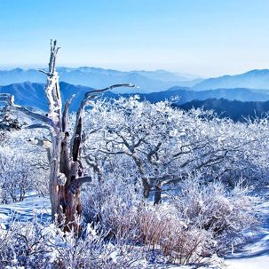 [설연휴여행] 덕유산곤도라 눈꽃여행
