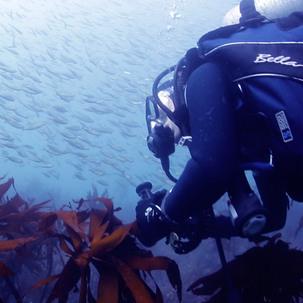 [7%] 성산스쿠버 다이빙&오픈워터