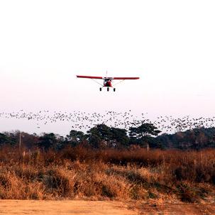 [화성] 하늘누리 경비행기 45분!체험